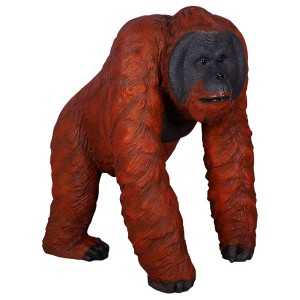 Walking Male Orangutan