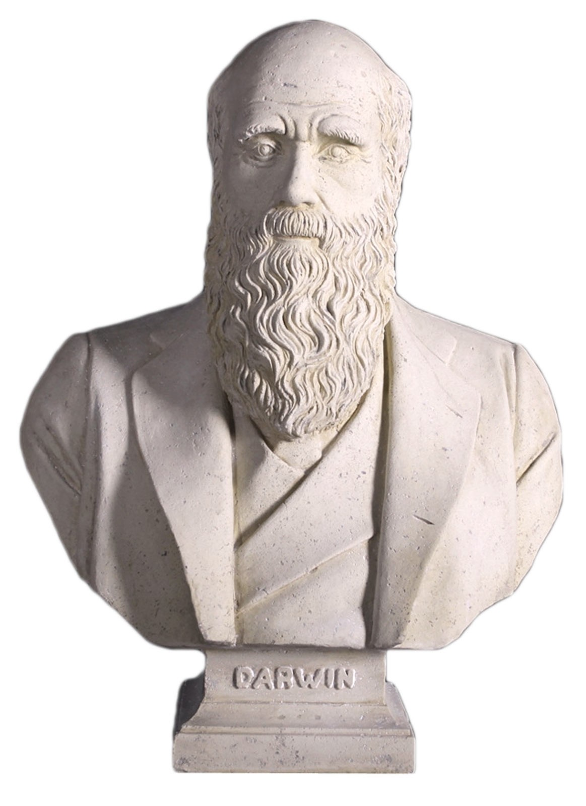 Charles Darwin Bust - Roman Stone Finish