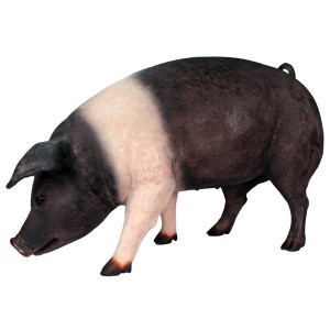 Life Size Saddleback Pig Sculpture - 127.5cm