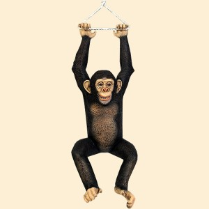 Hanging Monkey Chimpanzee