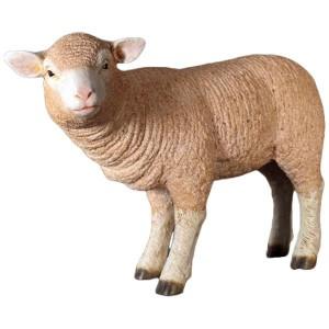 Standing Merino Lamb 62cm