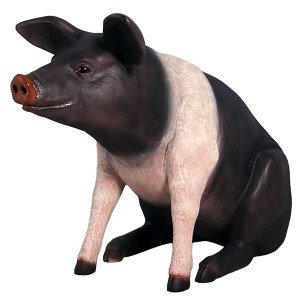 Life Size Sitting Saddleback Pig Sculpture 115cm