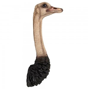 Ostrich Head Wall Hanging